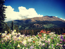 6 of the Best Wildflower Viewing Hikes in Summit County