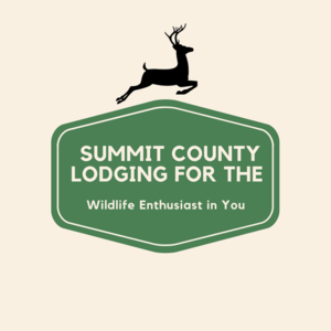 Summit County Lodging Wildlife Enthusiast
